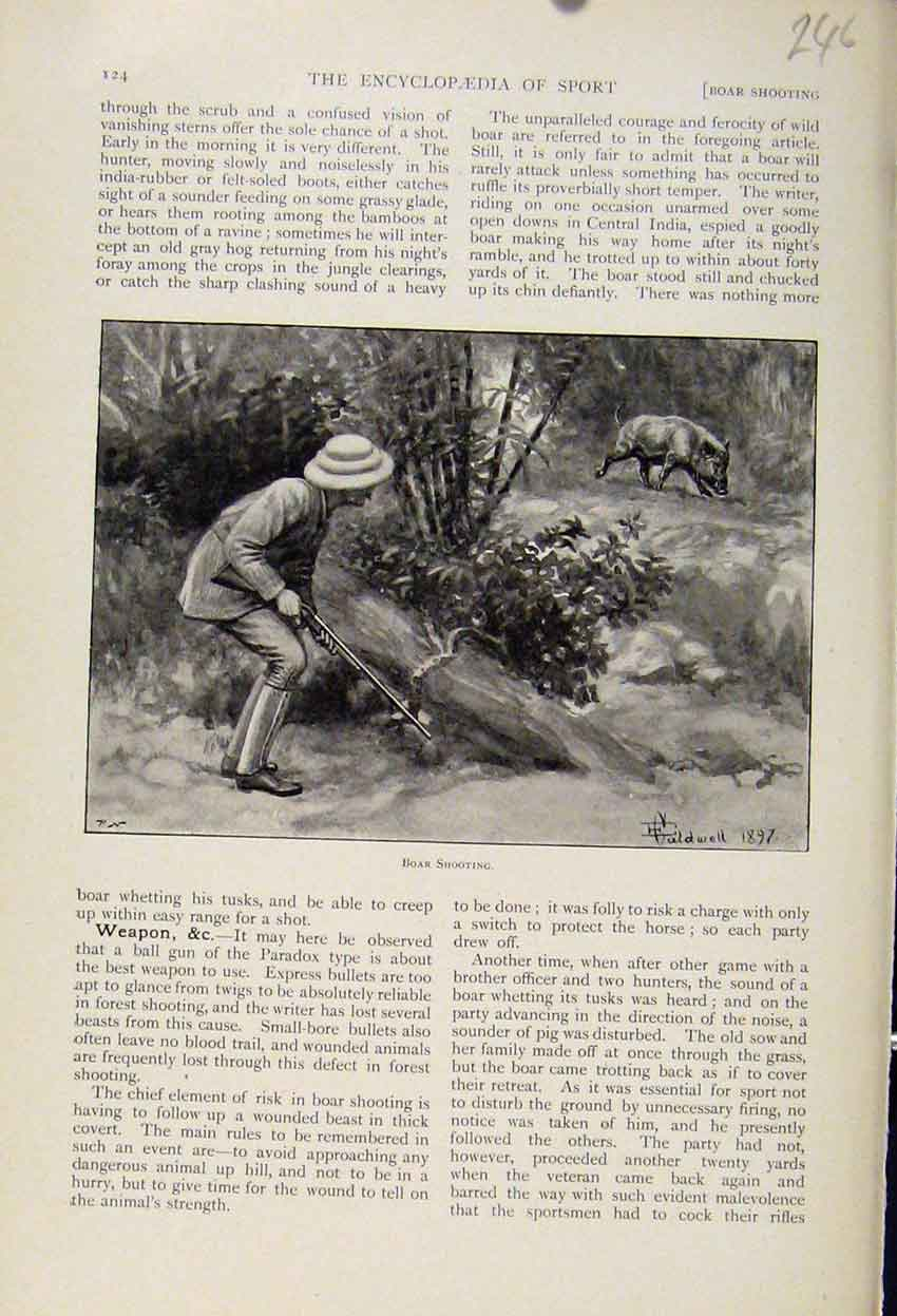 Print Boar Shooting The Encyclopedia Sport 468241 Old Original