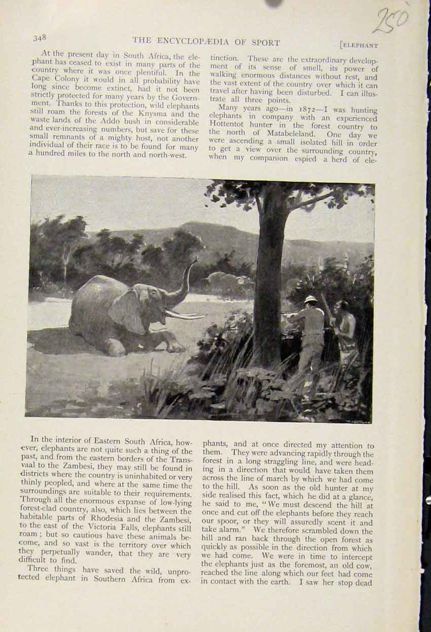 Print Poachers Ivory Elephant The Encyclopedia Sport 508241 Old Original