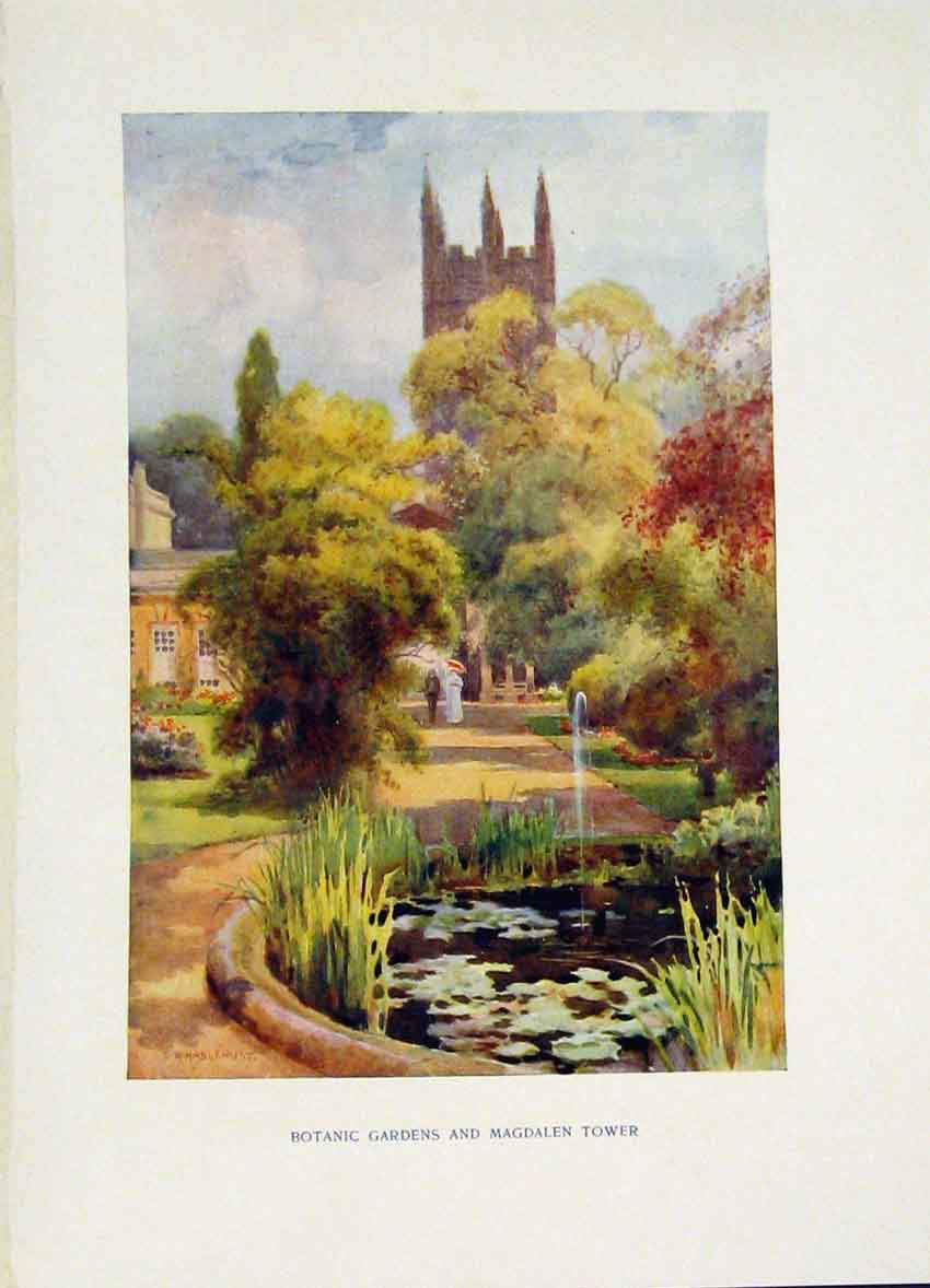 Print Botanic Gardens Magdalen Tower Painting By Haslehust 348251 Old Original