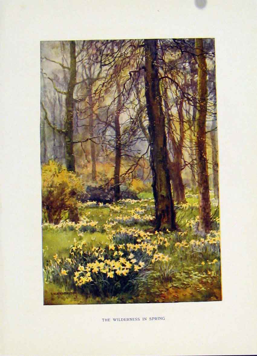 Print Hampton Court C1920 Painting By Haslehust Wilderness 348251 Old Original