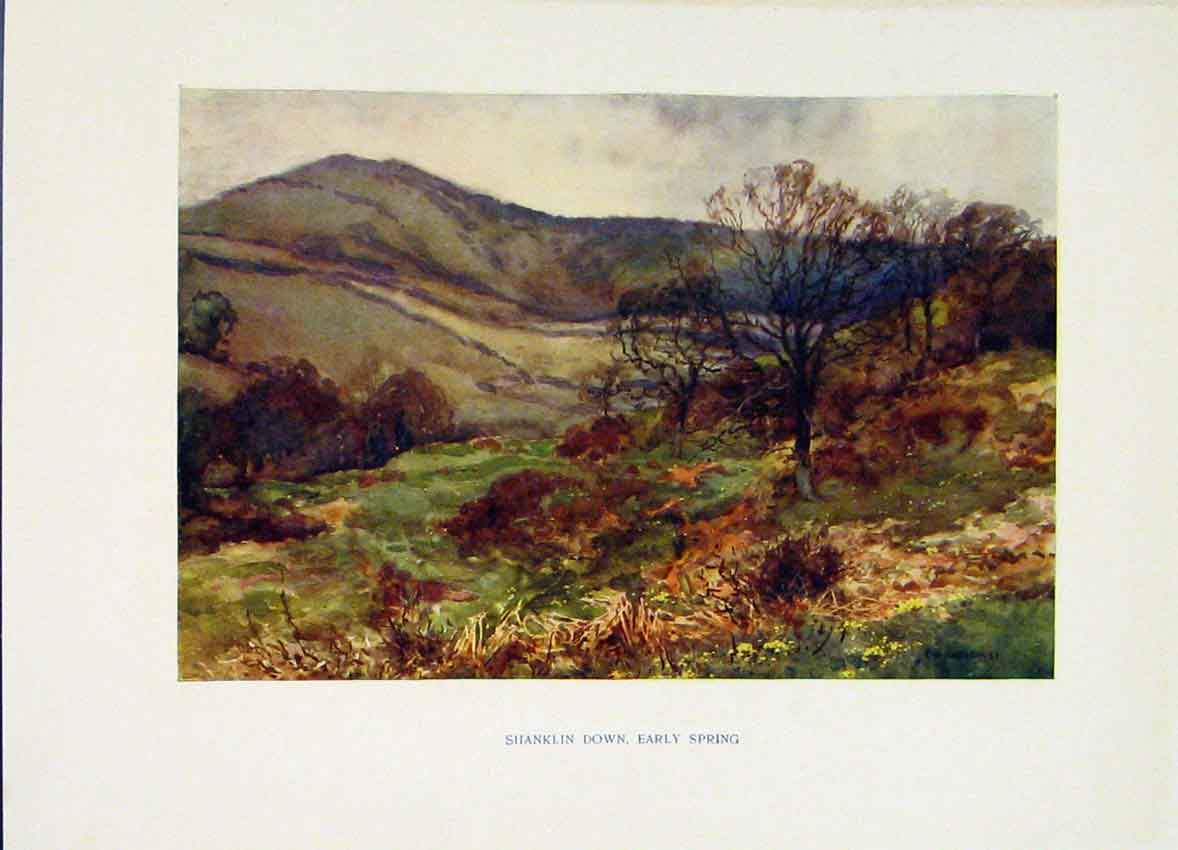Print Shanklin Down Early Spring Painting Haslehust C1920 278251 Old Original