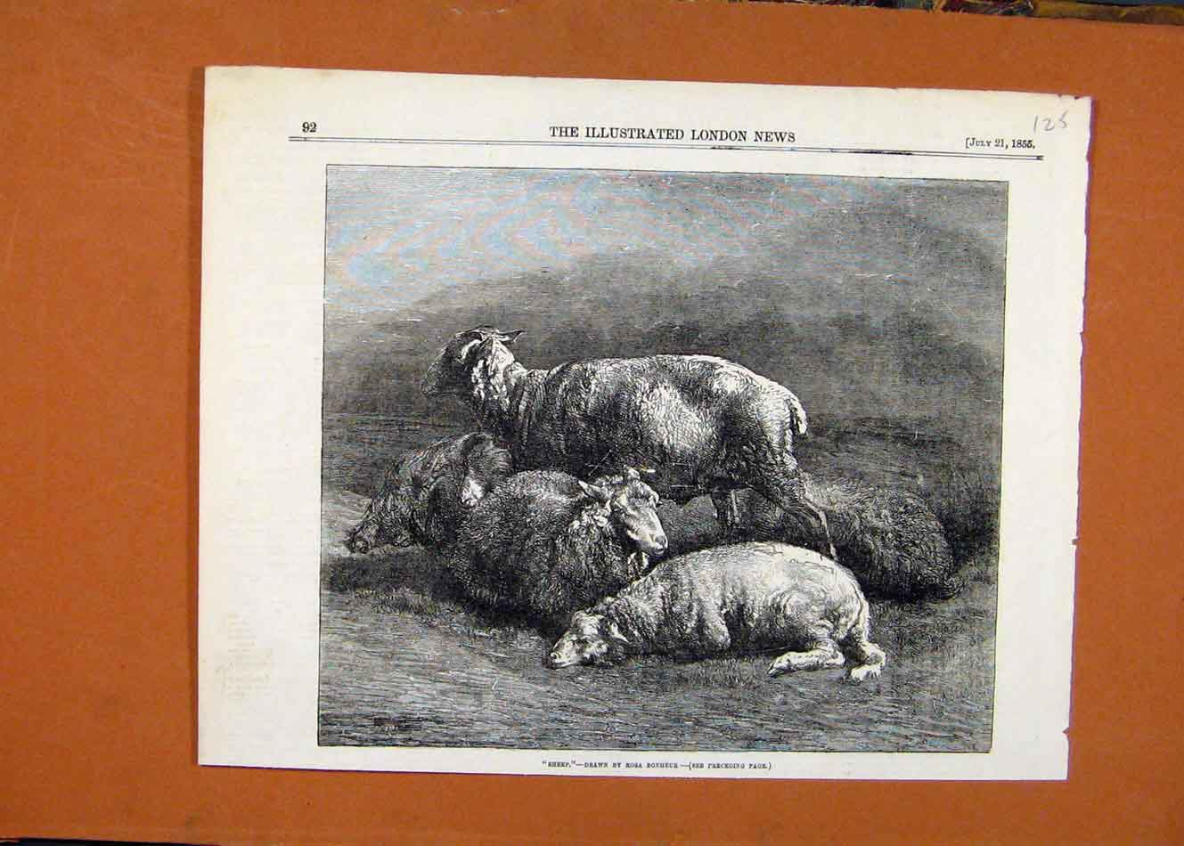 [Old Antique Print Sheep Bonheur C1855 Illustrated London News 258260 ]