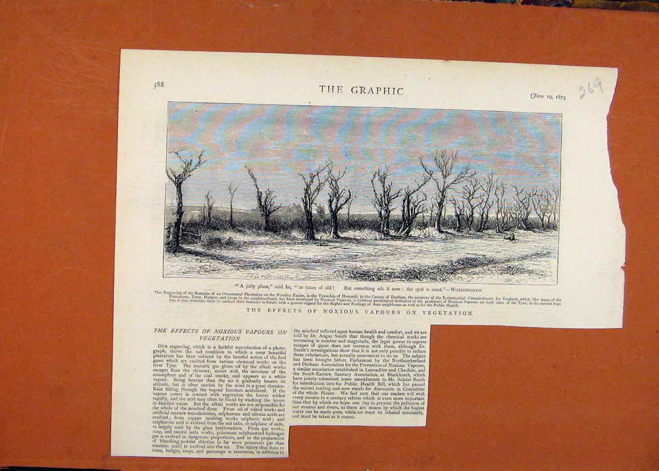 [Old Antique Print The Graphic C1875 Effects Noxious Vapours Vegetation 698260 ]