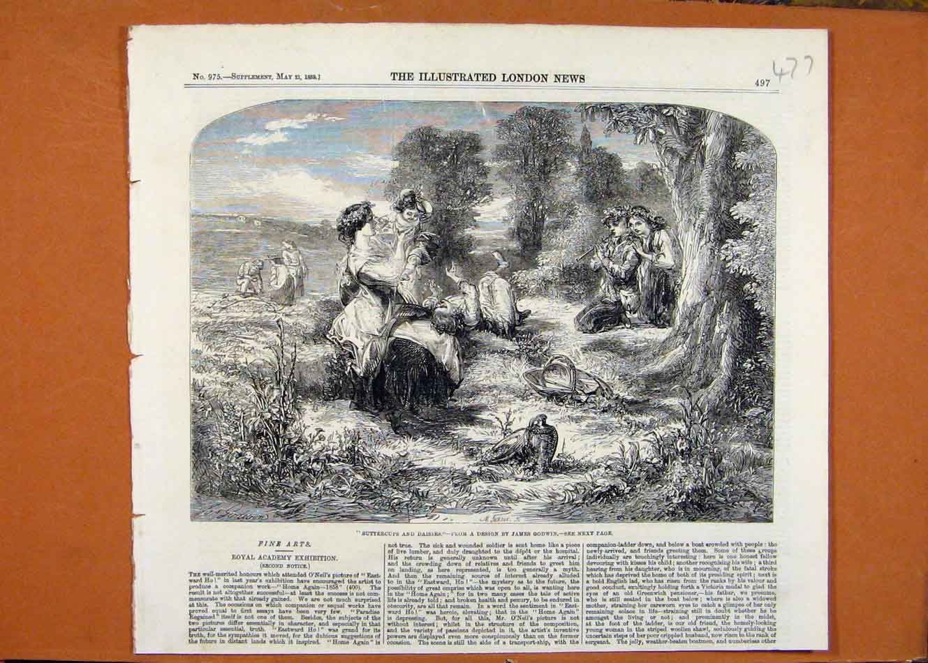 Print Buttercups And Daisies James Godwin C1859 London News 778260 Old Original
