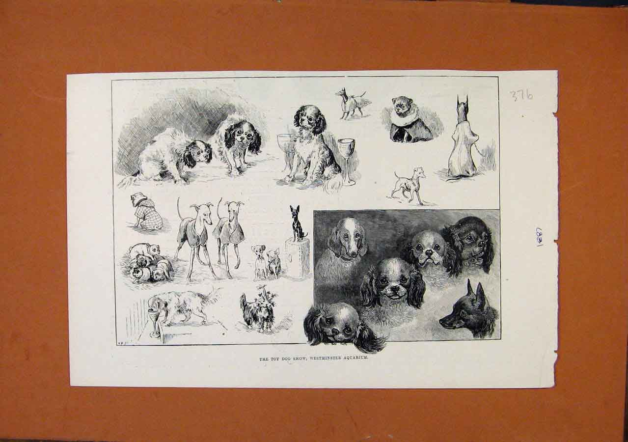 Print C1887 Toy Dog Show Westminster Aquarium C1887 768270 Old Original