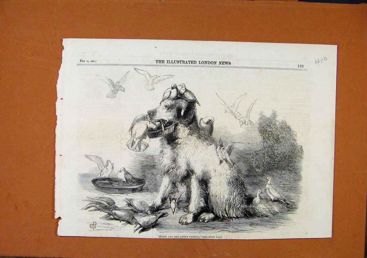 Print Folly And Friends C1880 Illustrated London News 108270 Old Original