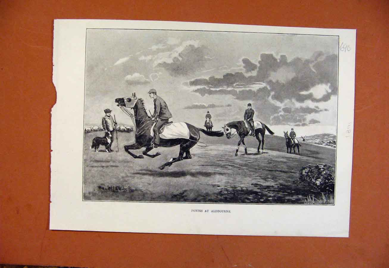 Print Ponies At Aldebourne C1891 From London News 908270 Old Original