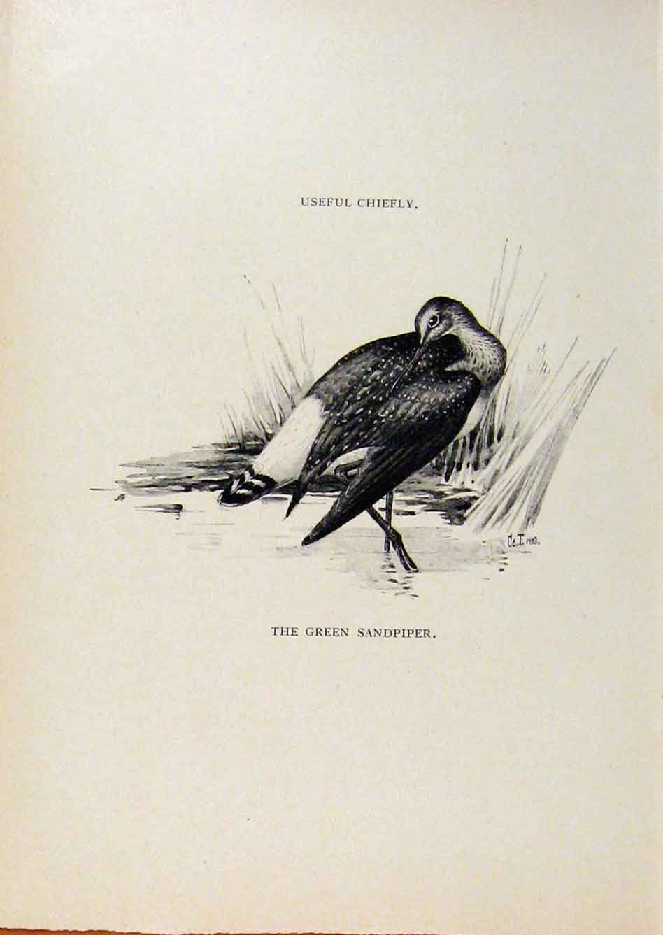 Print Birds Useful And Harmful Green Sandpiper By Csorgey 208291 Old Original