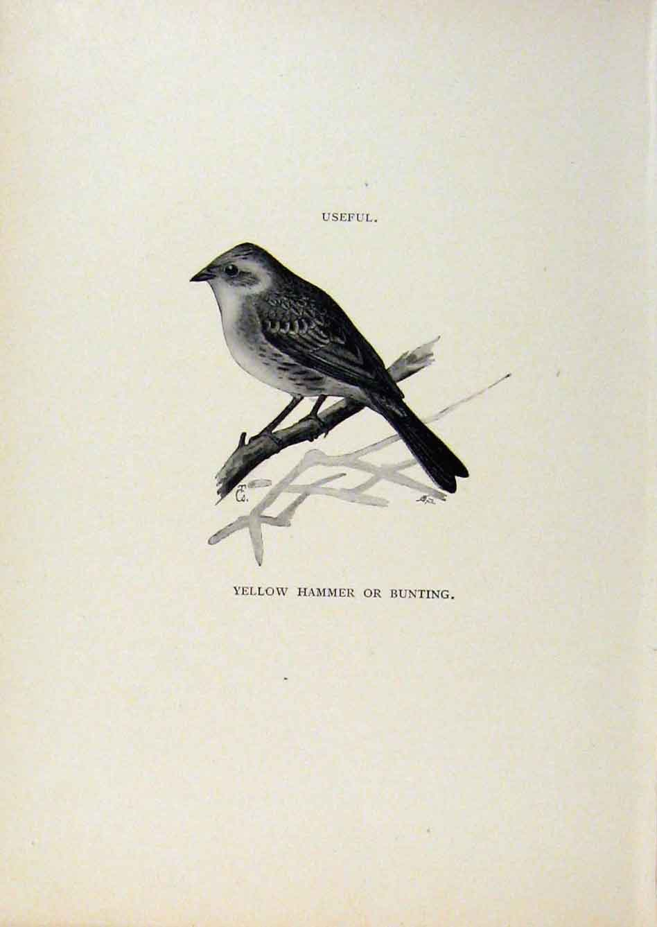 Print Birds Useful And Harmful Yellow Hammer Bunting 258291 Old Original