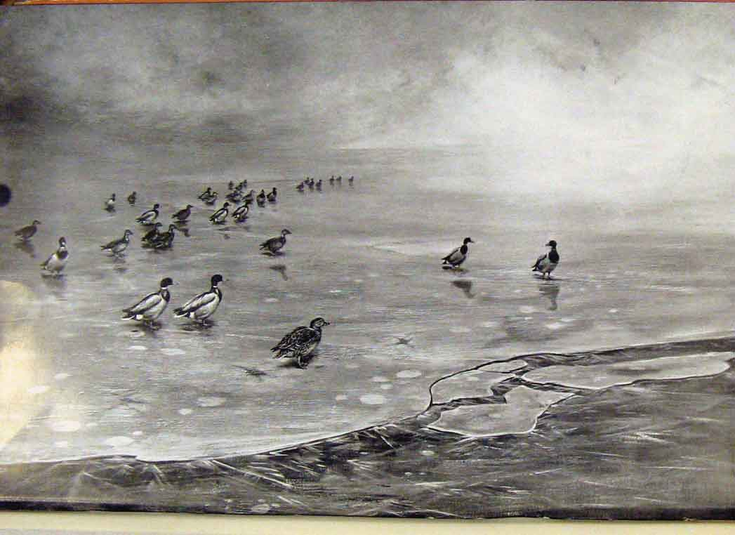 Print Memoirs An Artist Naturalist Mallard On Ice 188361 Old Original