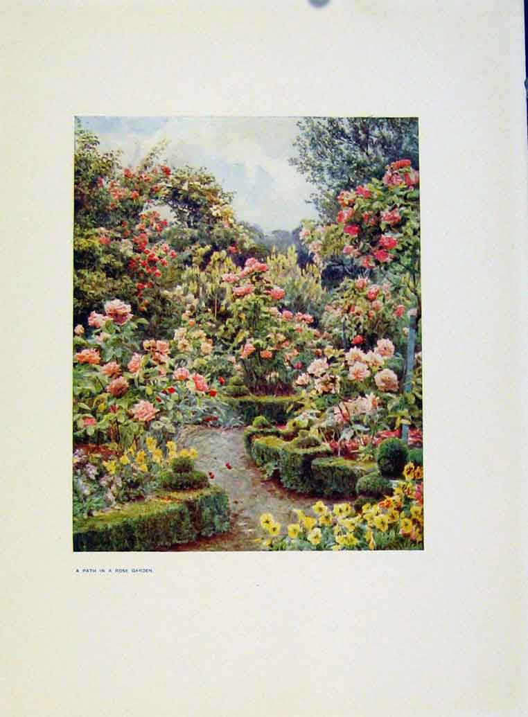 Print Charm Gardens Path In Rose Garden By Calthrop 308401 Old Original