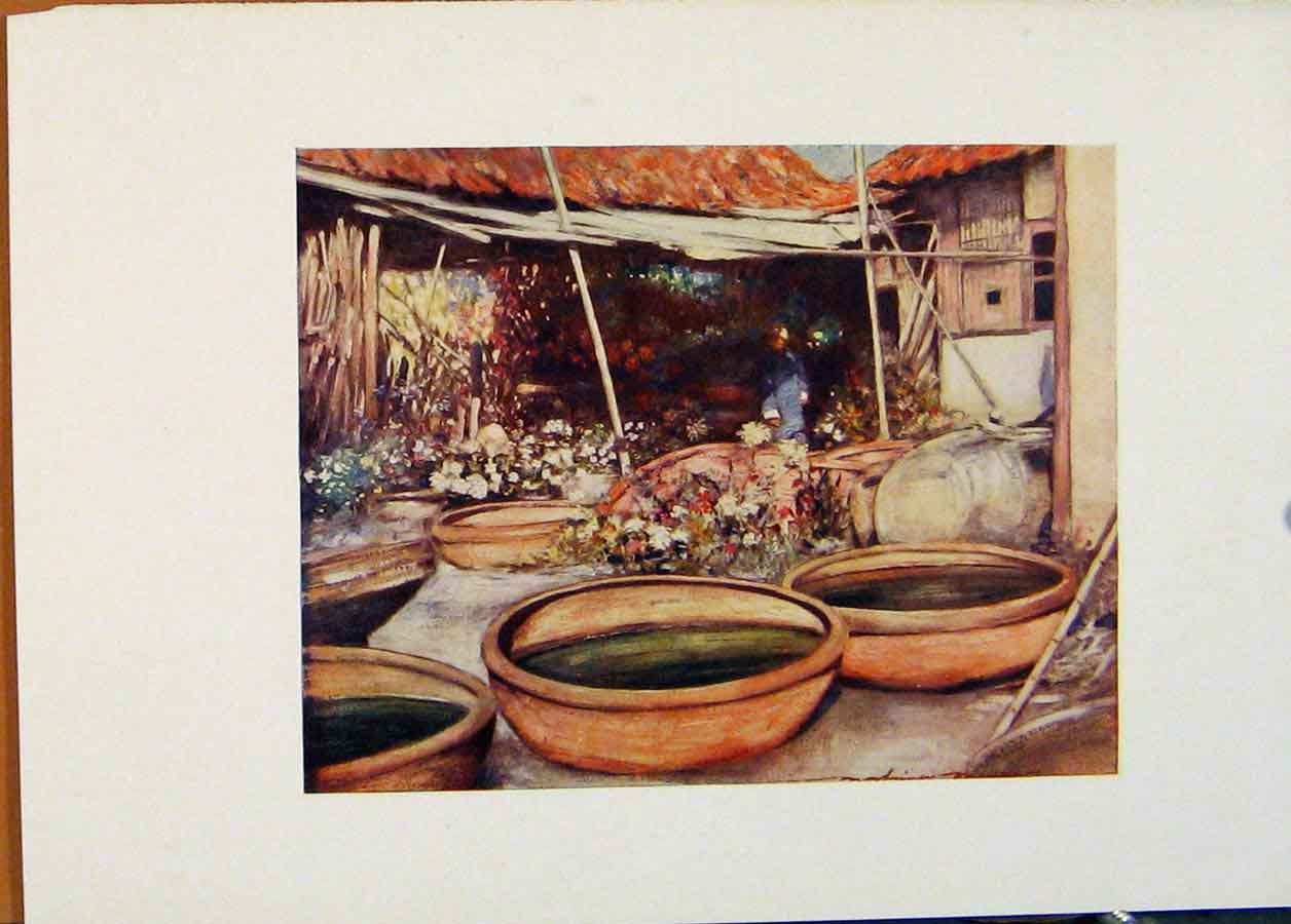 Print Nursery Garden China World Pictures 1902 448451 Old Original