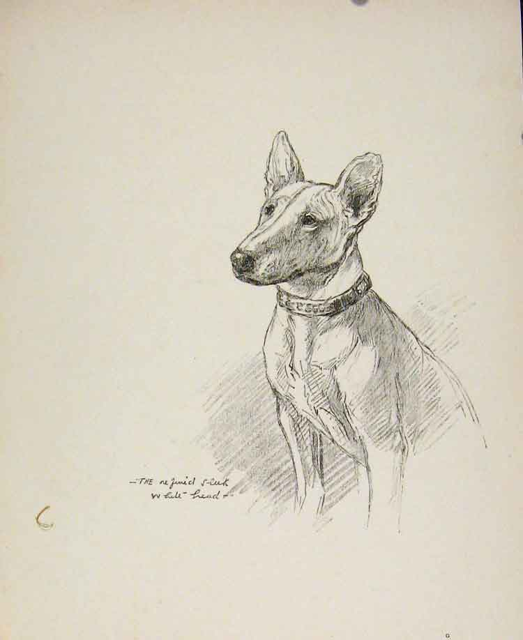 Print Dog Sketch Drawing Rogue'S Gallery C1939 128591 Old Original