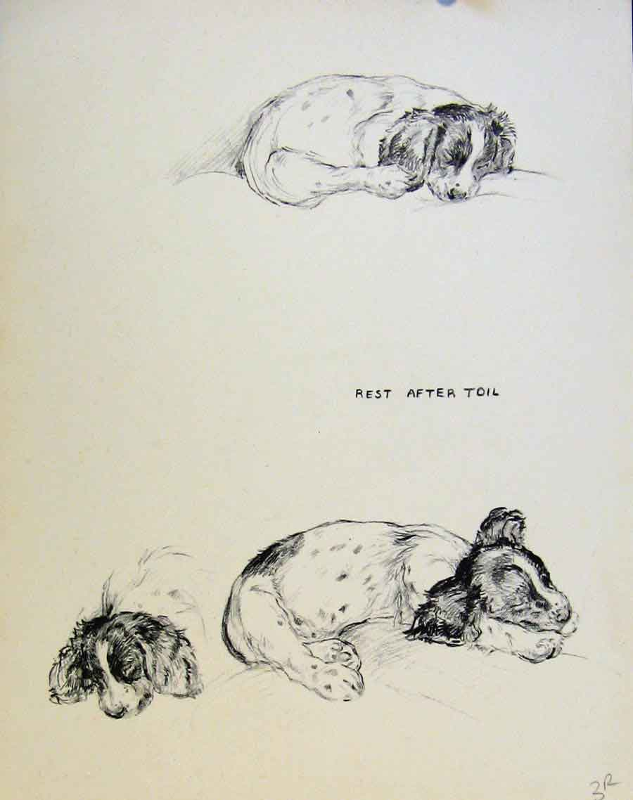 Print Just Pups By K F Barker Pencil Sketch Dog Drawing 03R8631 Old Original