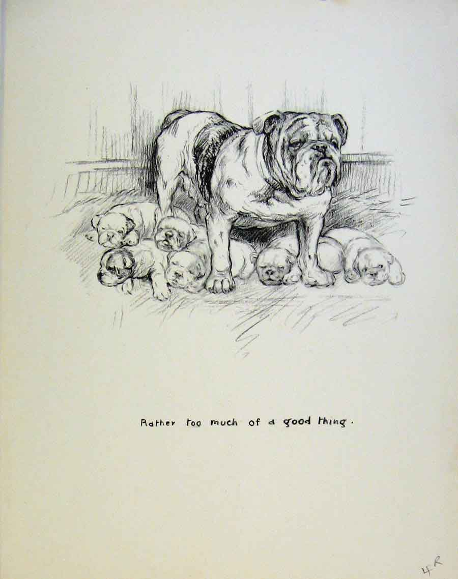 Print Dog Drawing Puppy Sketches By Barker C1937 04R8631 Old Original