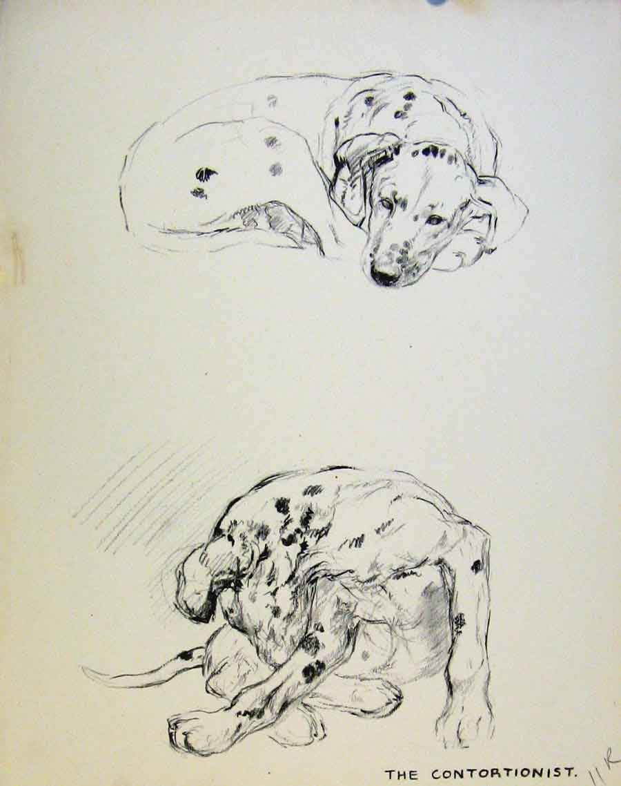 Print Just Pups By K F Barker Pencil Dog Drawing 11R8631 Old Original