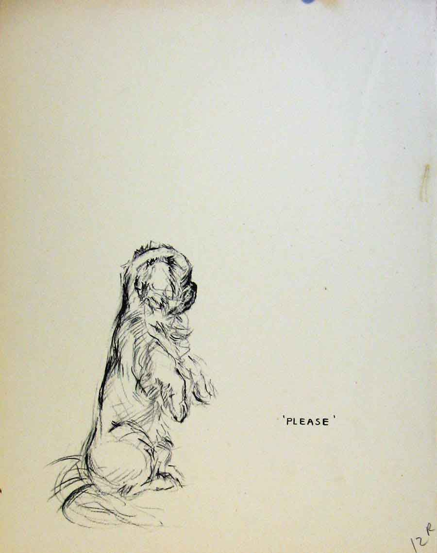 Print Just Pups By K F Barker Pencil Sketches Dog Puppy 12R8631 Old Original