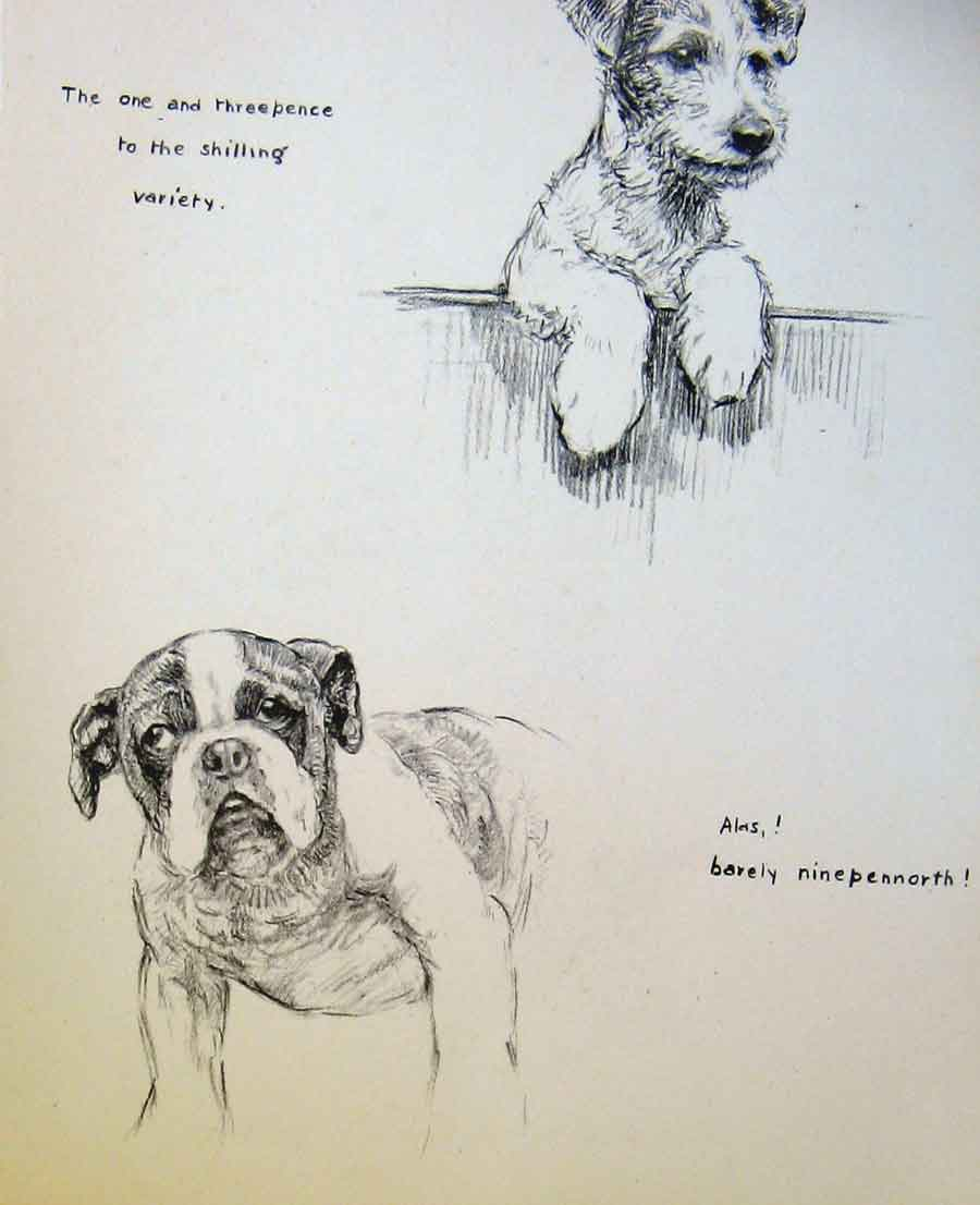 Print Dog Puppy Drawing Pencil Sketch By Barker 16R8631 Old Original