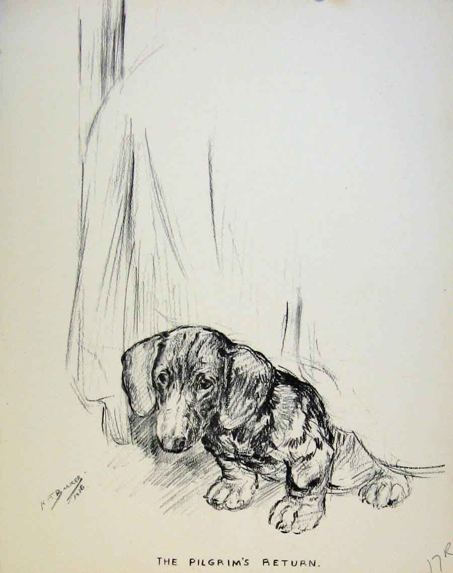 Print Dog Drawing Just Pups By K F Barker Puppy Art 17R8631 Old Original