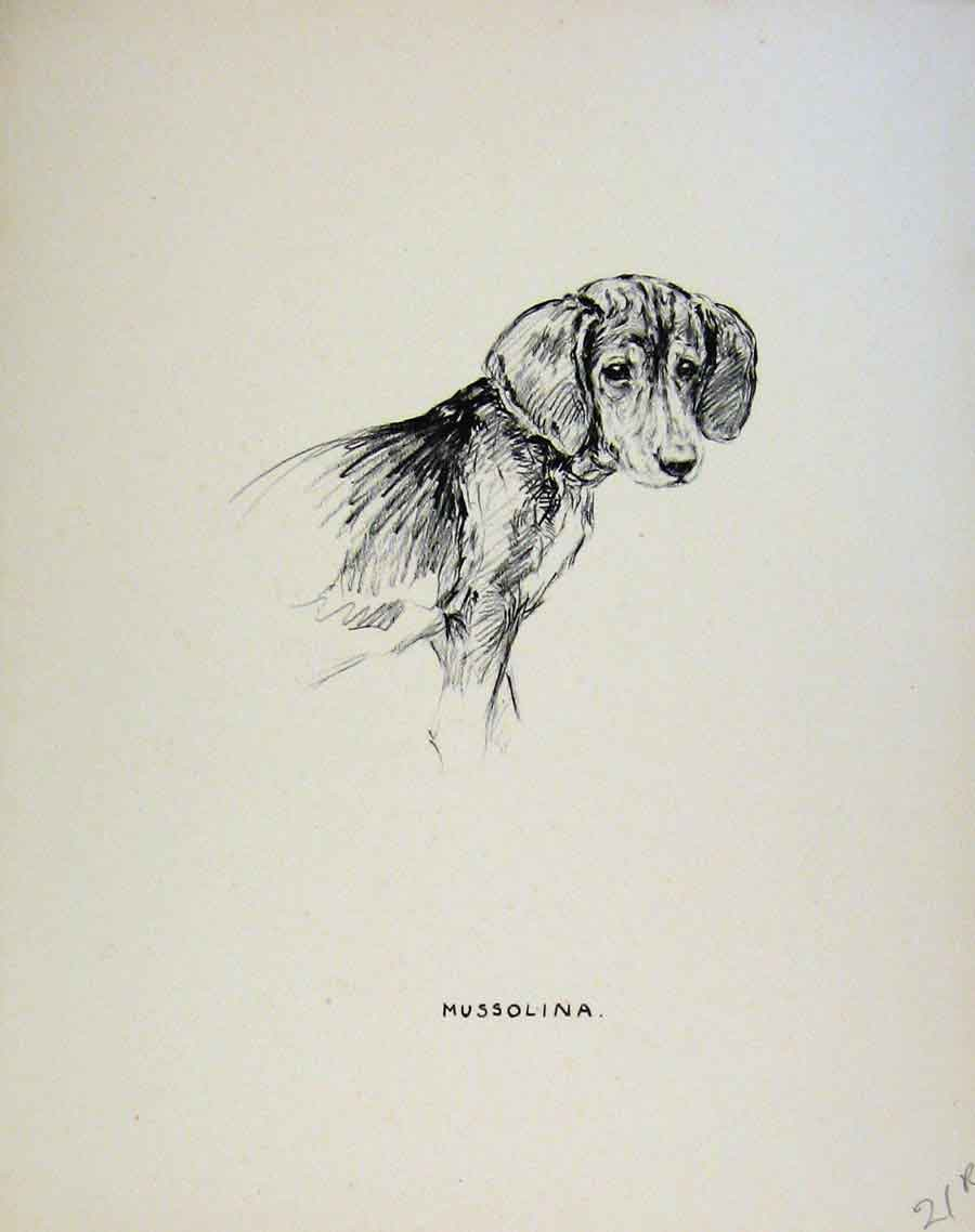 Print Pencil Sketch Dog Drawing Just Pups By K F Barker 21R8631 Old Original