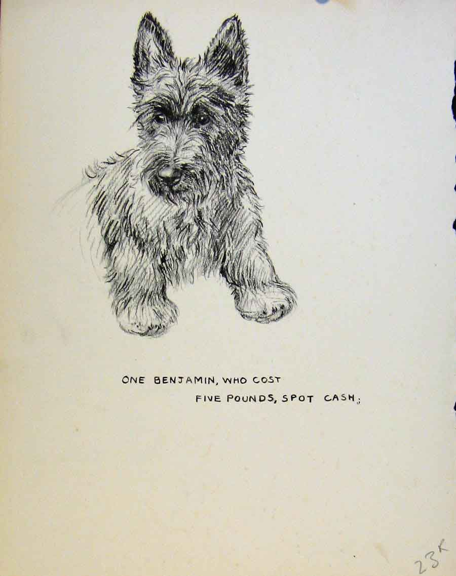 Print Just Pups By K F Barker Pencil Sketches C1937 23R8631 Old Original