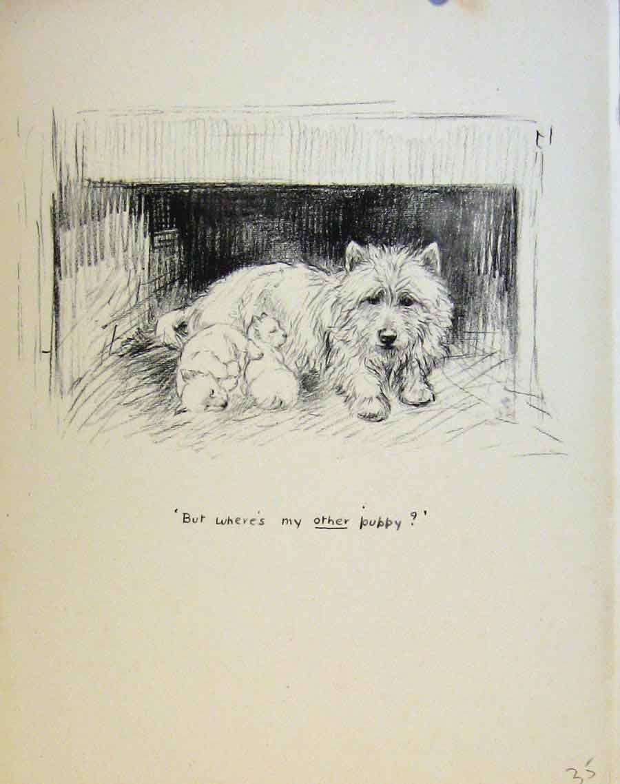 Print Puppy Dog Drawing Just Pups By K F Barker 358631 Old Original