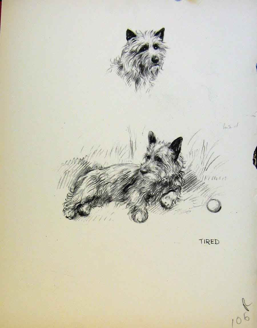 Print Pencil Sketch Tired Dogs Dog Drawing By Barker 06R8641 Old Original