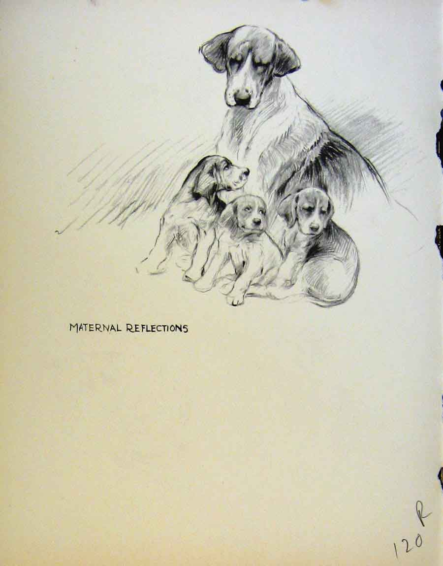 Print Fine Art Sketches Dogs Pencil By Barker 20R8641 Old Original