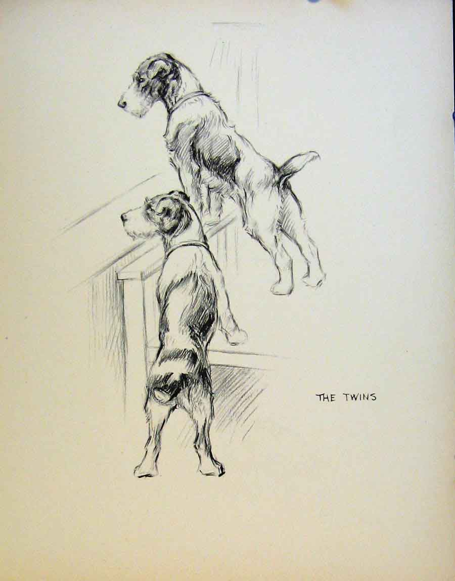 Print Just Dogs By K F Barker Pencil Sketches Fine Art C1933 33R8641 Old Original