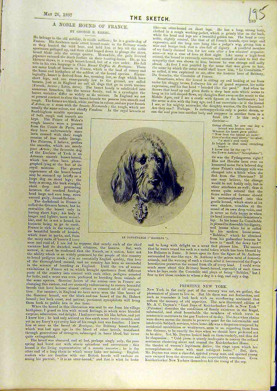 Print 1897 Portrait Dog Le-Connetable Babbles Hound French 958671 Old Original