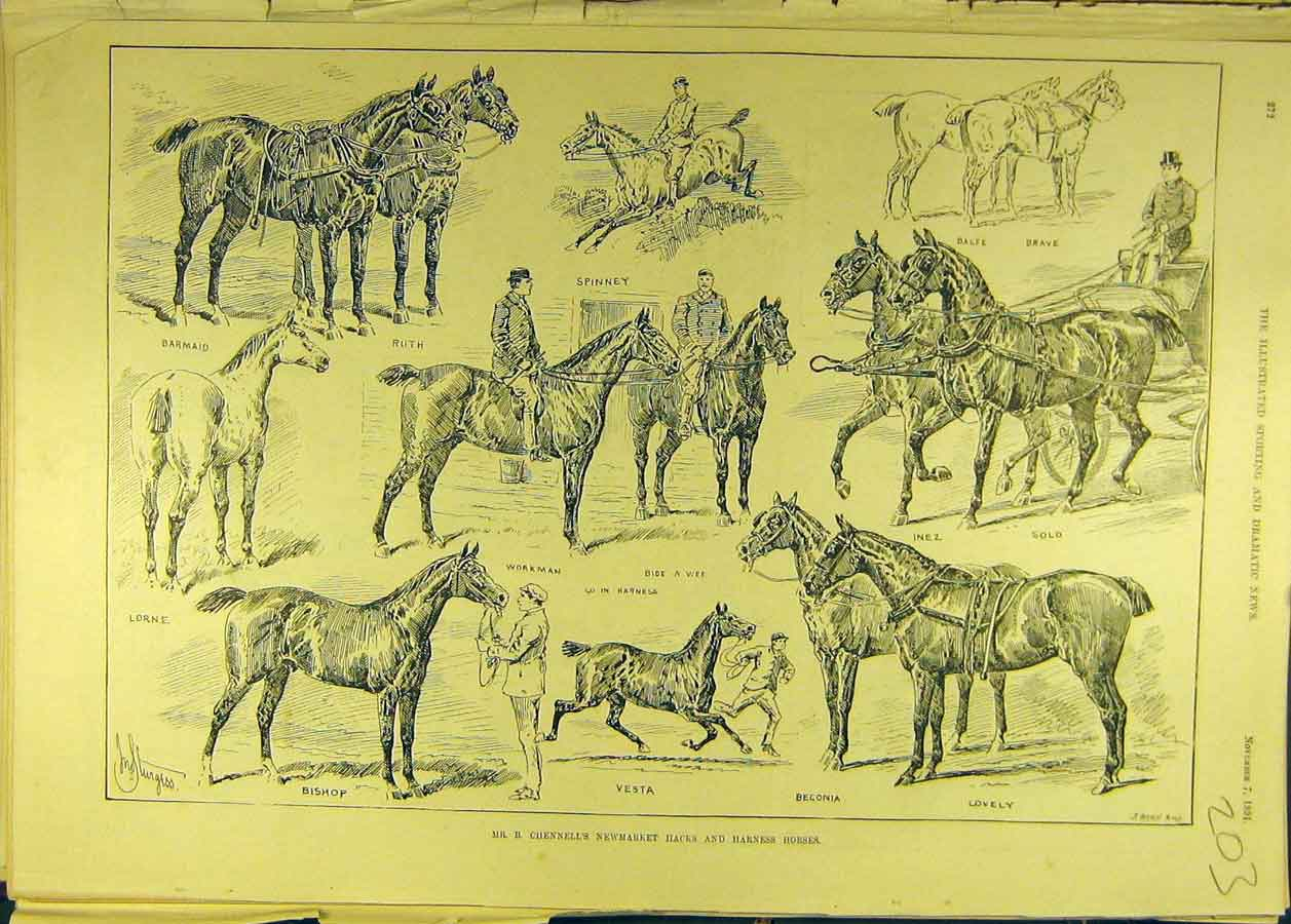Print 1891 Sturgess Chennell Newmarket Hacks Harness Horses 038681 Old Original