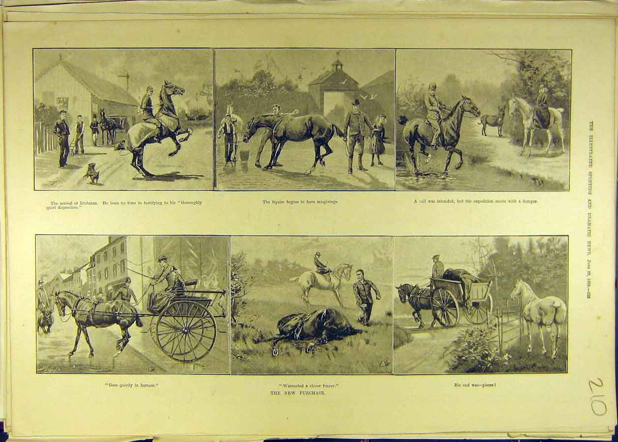 Print 1889 Horse Purchase Carriage Knackers Squire Equine 108681 Old Original