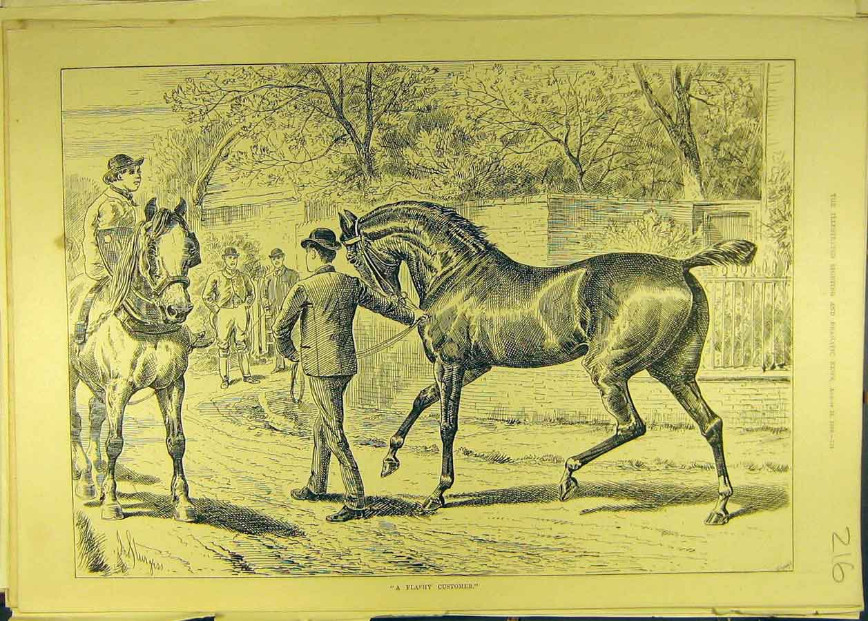 Print 1889 Flashy-Customer Horse Thoroughbred 168681 Old Original