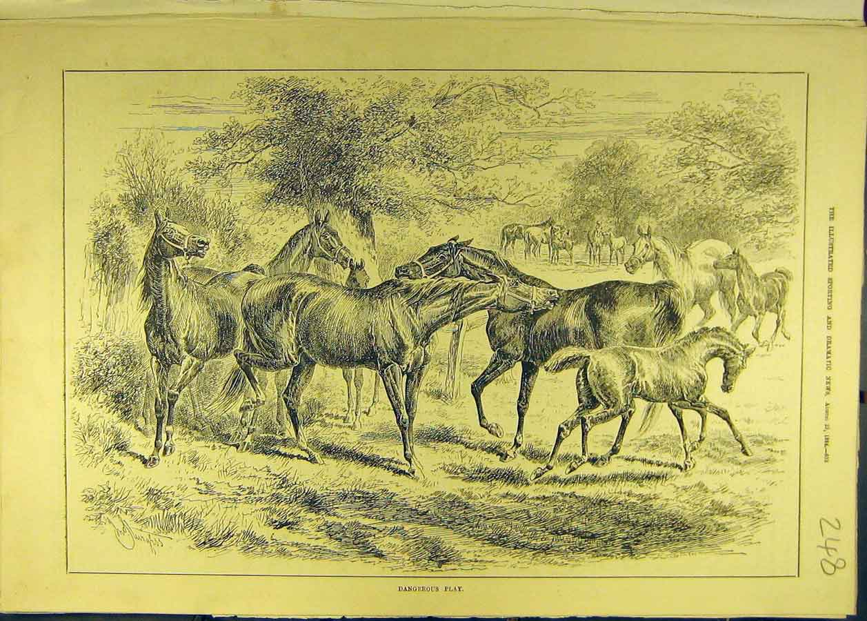 Print 1884 Dangerous-Play Horses Foals Horse Animal 488681 Old Original