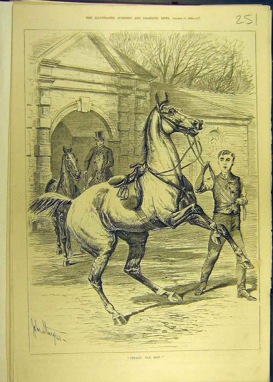 Print 1880 Steady Old-Man Horse Sturgess 518681 Old Original
