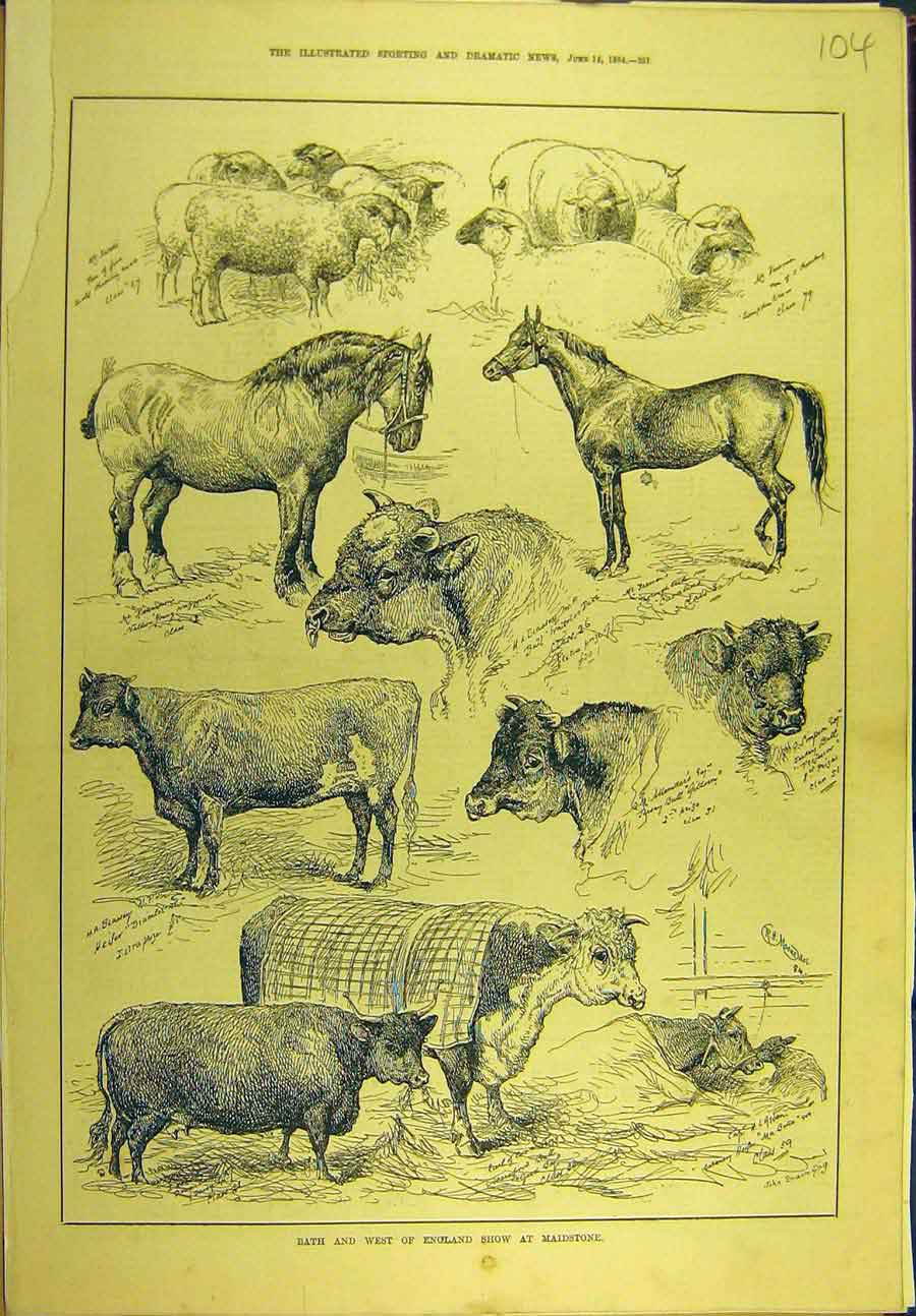 Print 1884 Bath West-England Show Maidstone Cattle Horse Shee 048721 Old Original