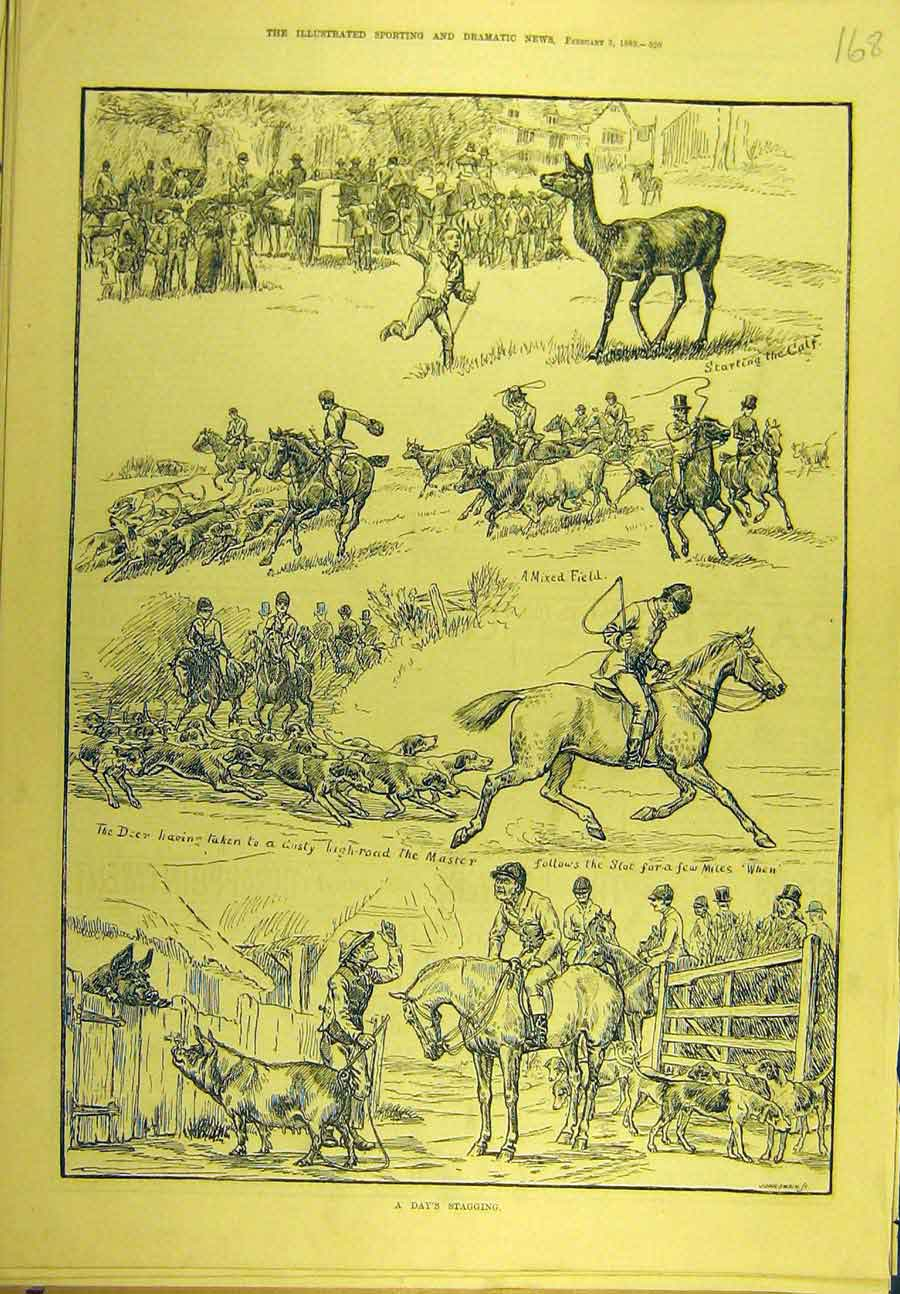 Print 1883 Stag-Hunting Stagging Animal Sport 688721 Old Original