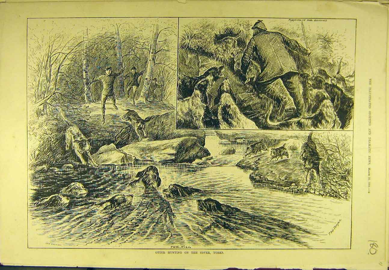 Print 1884 Otter Hunting Cover Yorks. Hounds Dogs Sport 808721 Old Original