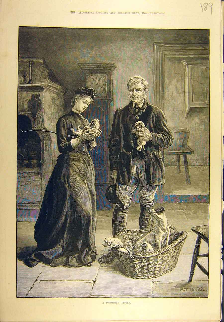 Print 1887 Promising Litter Dogs Puppies Terrier Dadd 898721 Old Original