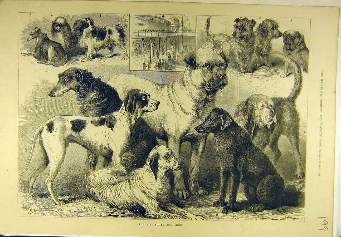 Print 1882 Birmingham Dog Show Hounds Terriers Canine 998721 Old Original