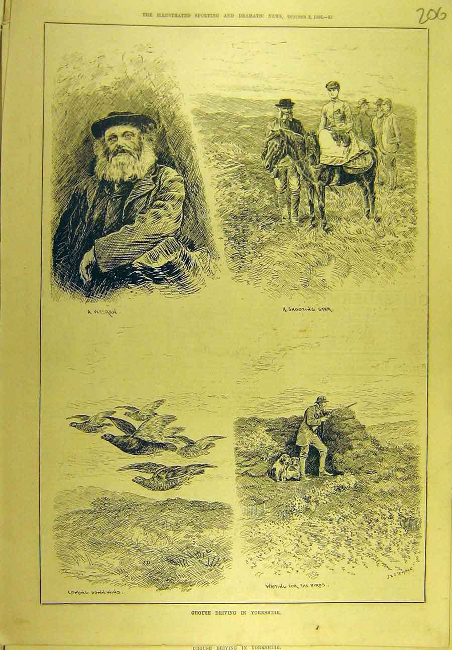Print 1886 Grouse Driving Yorkshire Veteran Game-Bird Sport 068721 Old Original