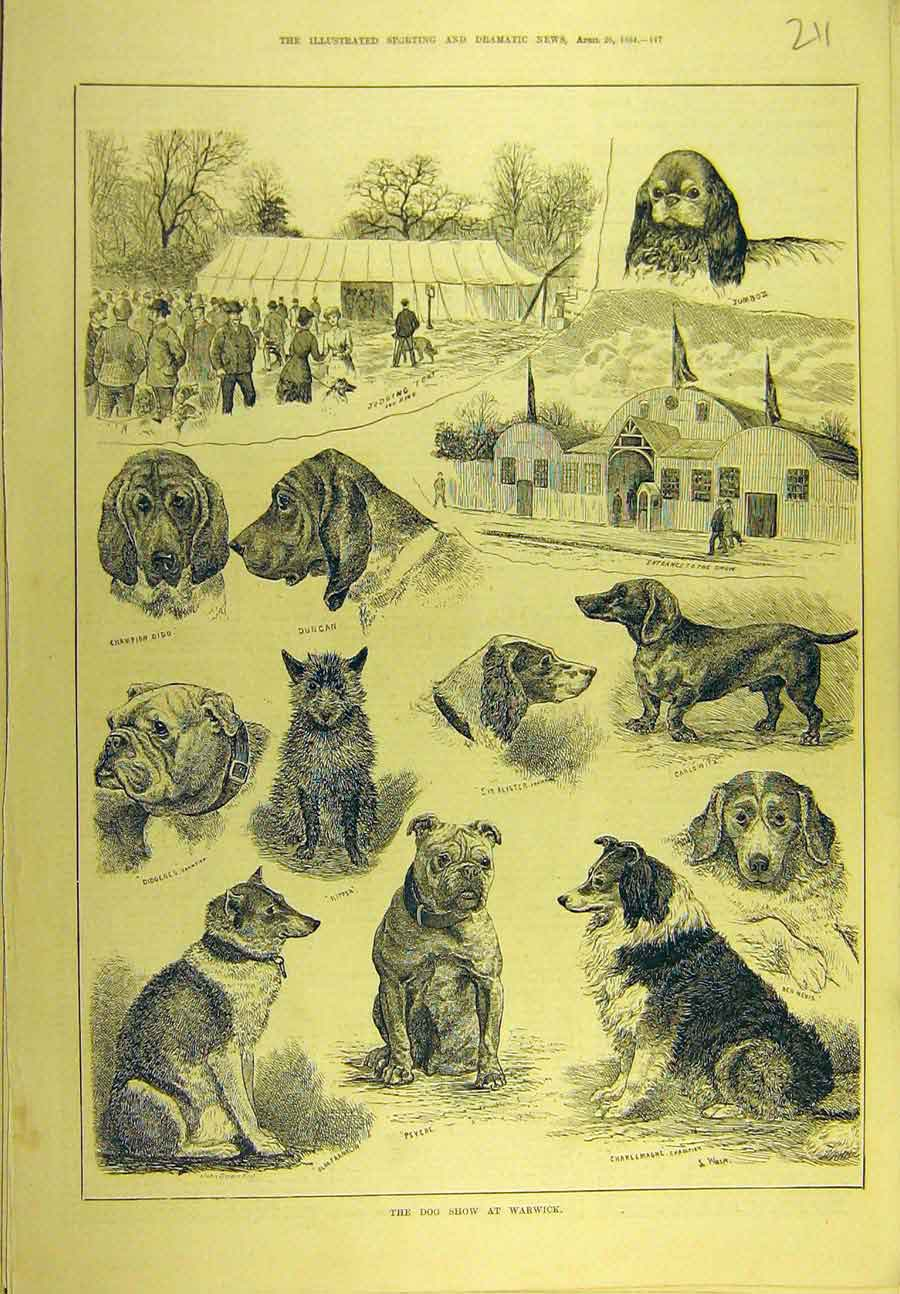 Print 1884 Dog Show Warwick Hounds Canine Sport 118721 Old Original