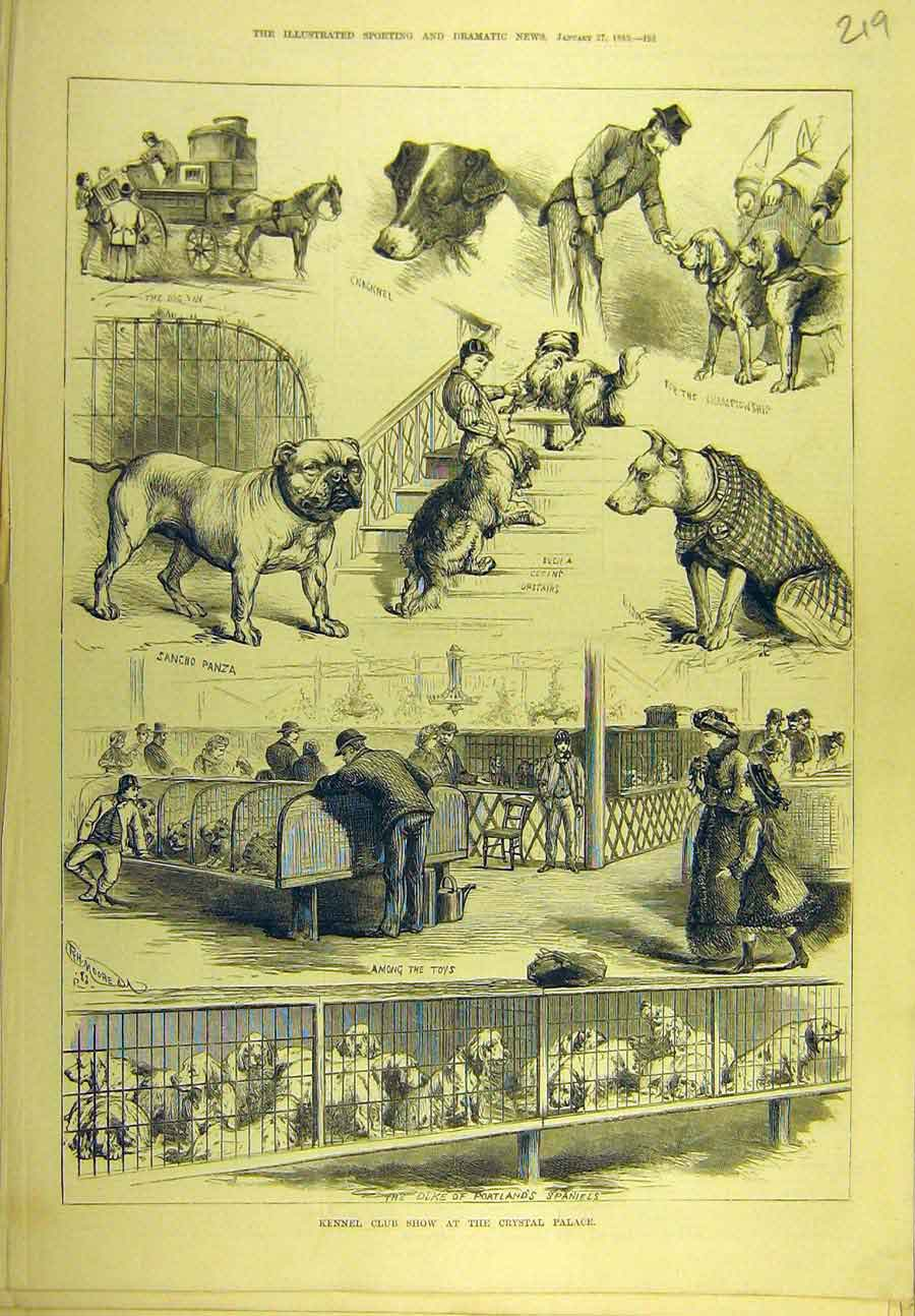 Print 1883 Kennel Club Show Crystal Palace Dogs 198721 Old Original