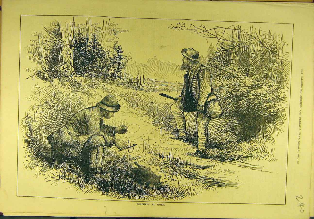 Print 1881 Poachers Work Hunting Rabbit Sport 408721 Old Original