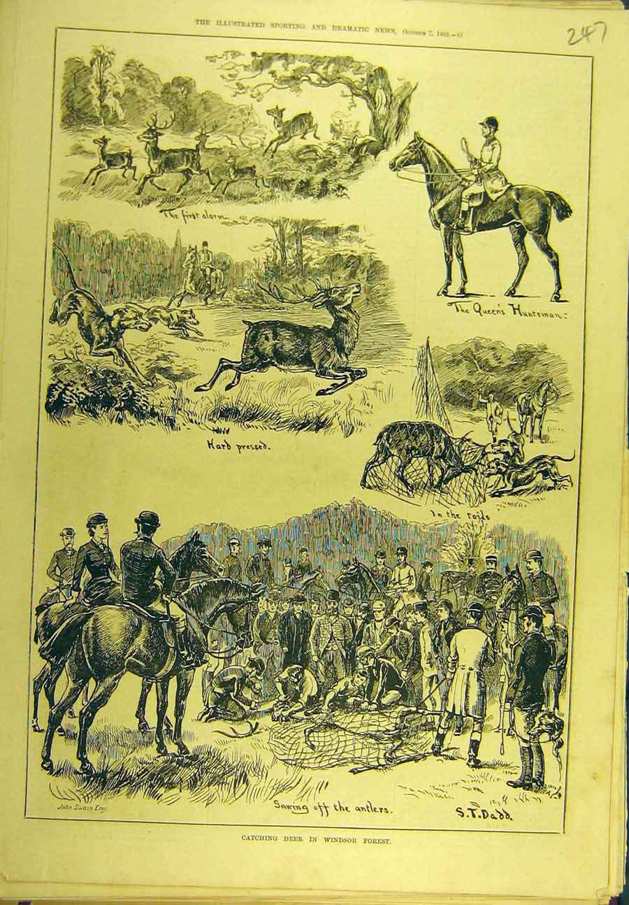 Print 1882 Deer Windsor Forest Hunting Huntsman Sport 478721 Old Original