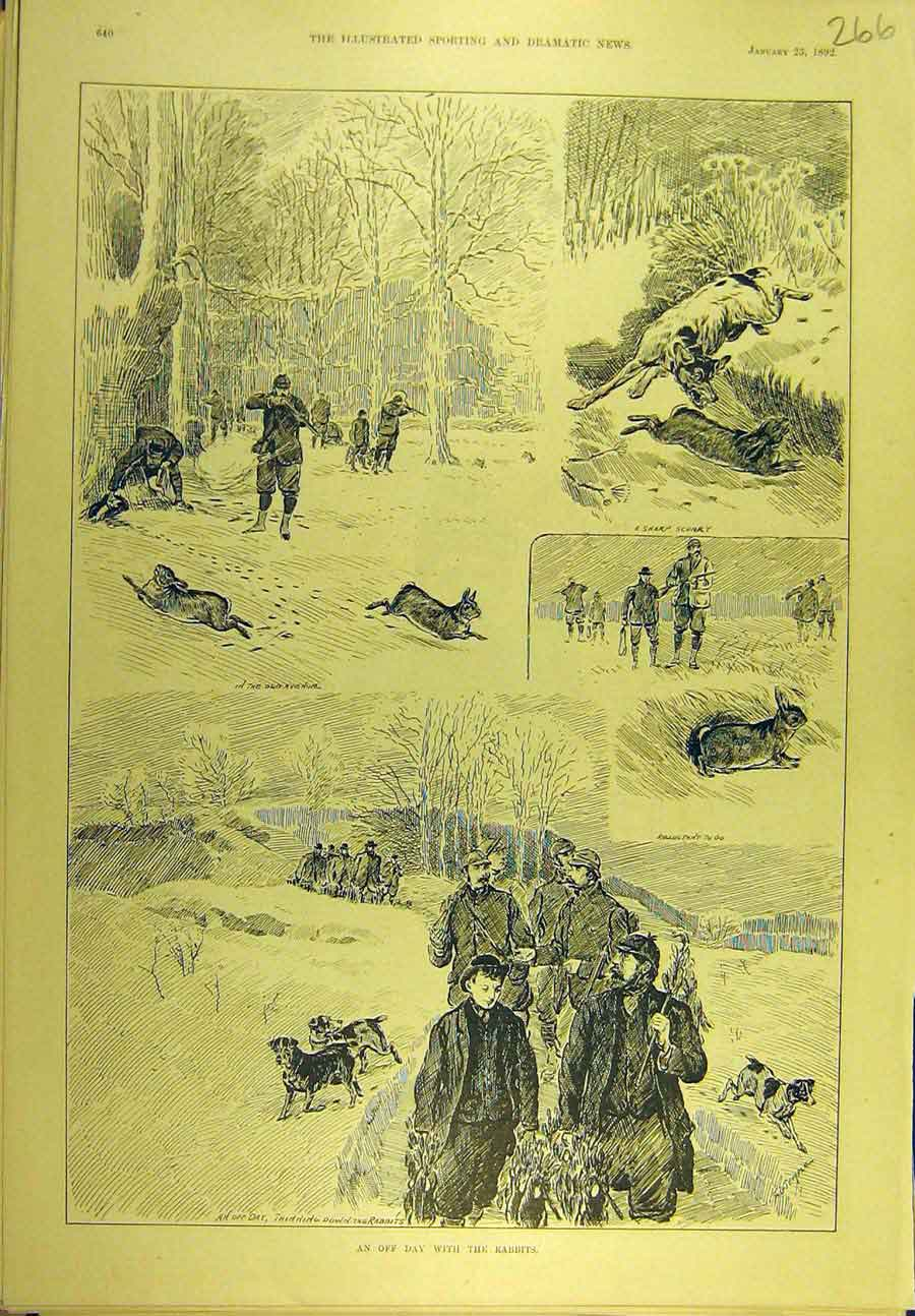 Print 1892 Rabbit Shooting Hunting Hounds Sport 668721 Old Original
