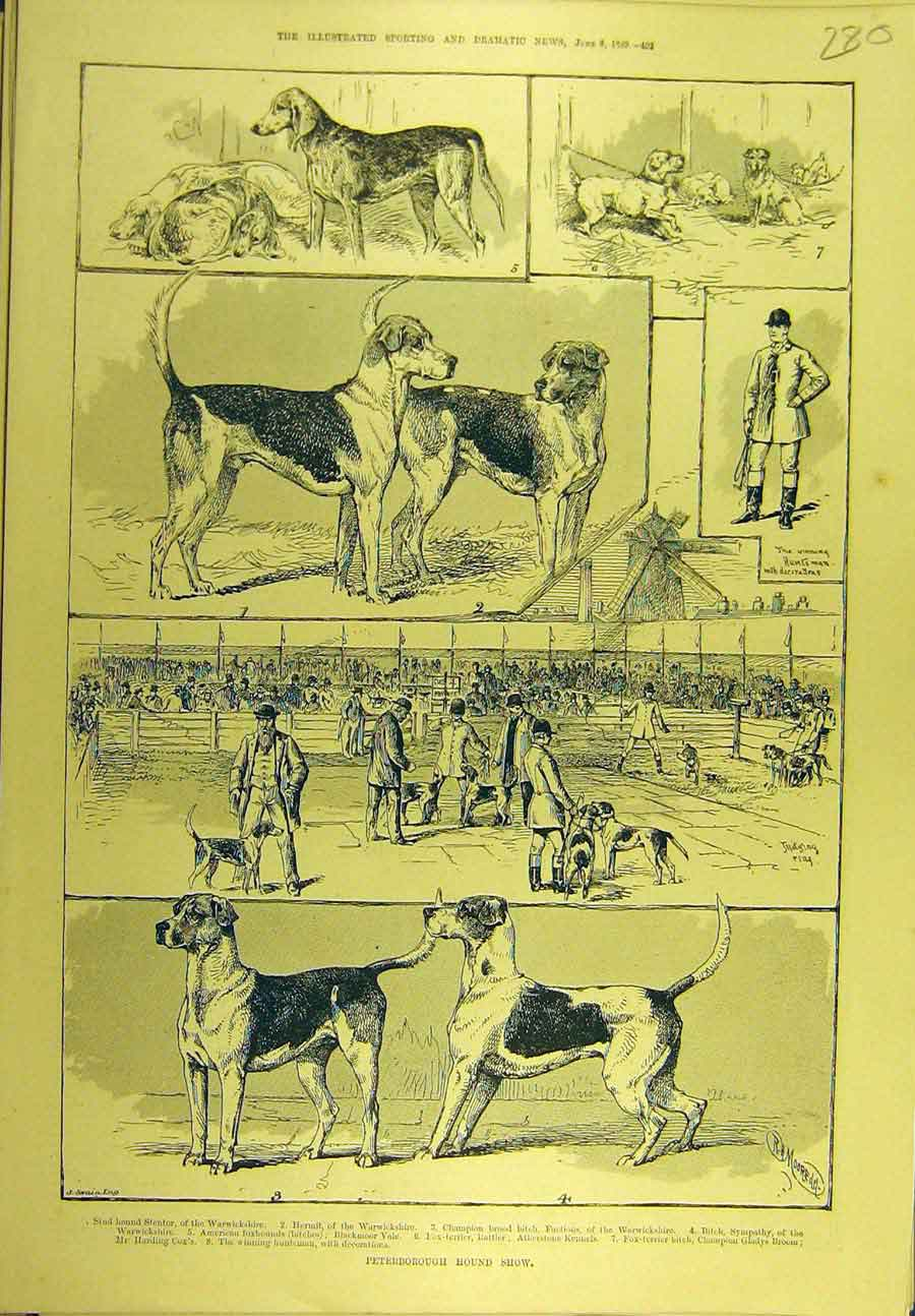Print 1889 Peterborough Hound Show Dogs Sport 808721 Old Original