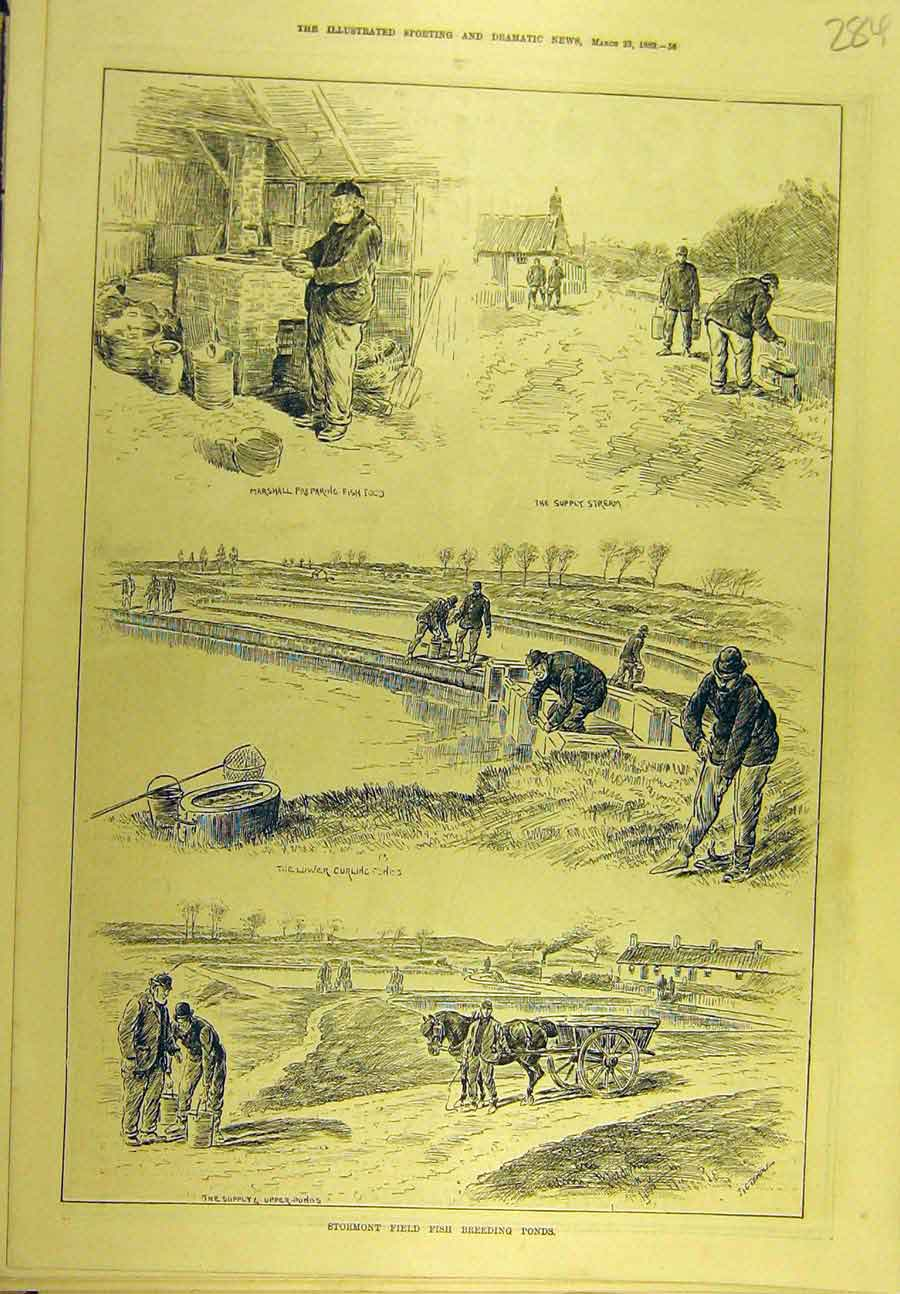 Print 1889 Stormont Field Fish Breeding Ponds Sport 848721 Old Original