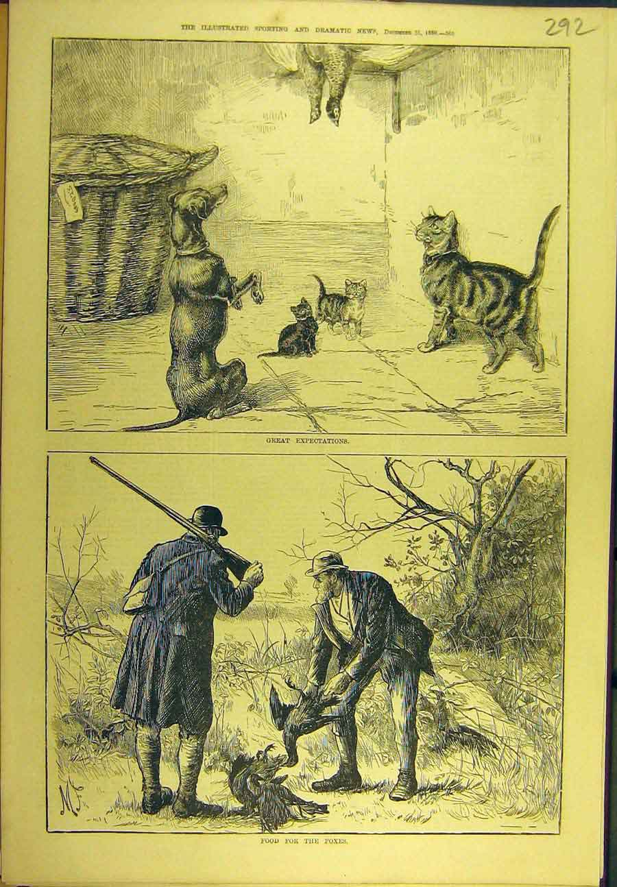 Print 1880 Food Foxes Dog Cat Pheasant Game-Bird Sport 928721 Old Original