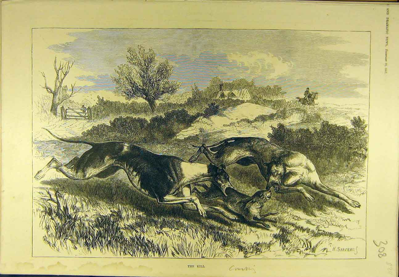 Print 1881 Coursing Hounds Rabbit Kill Sargent Sport 088721 Old Original